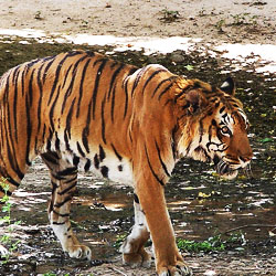Gwalior Zoo in Gwalior