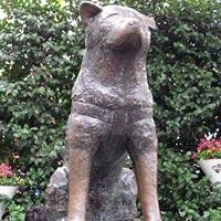 Hachiko Statue in Tokyo