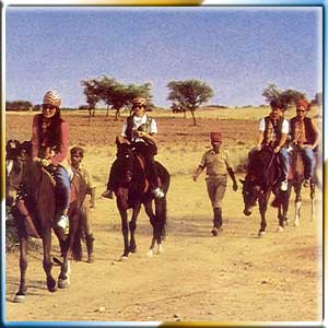 Horse Safari	 Tours