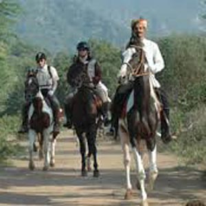 Horse Safari in Bangalore
