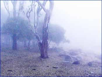 Horsley Hills in Tirupati