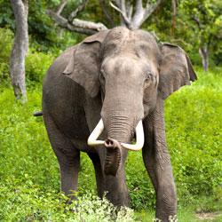 Intanki Wildlife Sanctuary in Dimapur