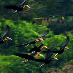 Itanagar Wildlife Sanctuary in Itanagar