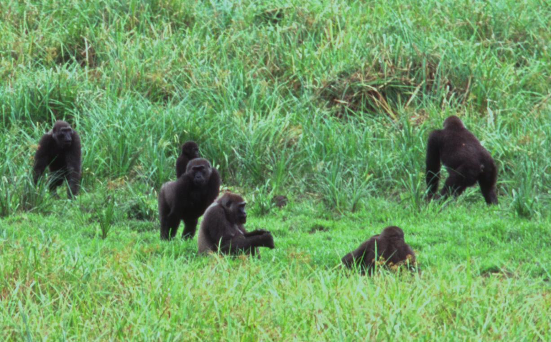 Ivindo National Park in Libreville