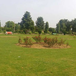 Japanese Garden in New Delhi