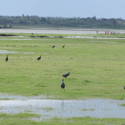 Jayakwadi Bird Sanctuary in Aurangabad
