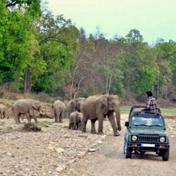 Jeep Safari in Jim Corbett in Nainital