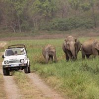 Jeep Safari in Jim Corbett in Nainital