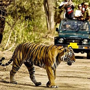 Jeep Safaris in Sariska Wildlife Sanctuary