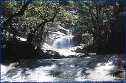 Josephine Falls in Brisbane