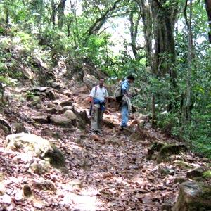 Jungle Trekking in Kudremukh