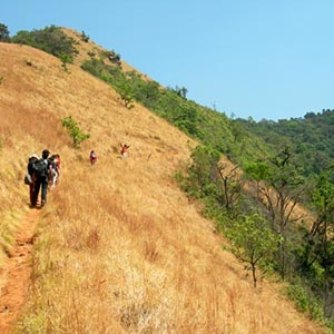 Jungle Trekking in  Shimoga