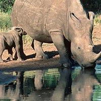 Kalakkadu Wildlife Sanctuary