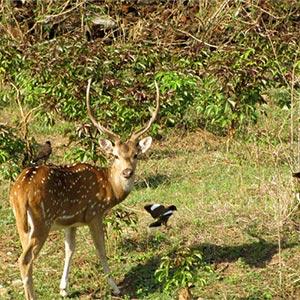 Kalsubai Harishchandragad Wildlife Sanctuary