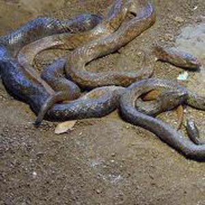 Katraj Snake Park