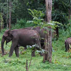 Kaundinya Wildlife Sanctuary in Palamaner