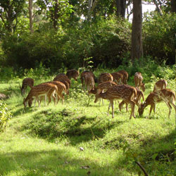 Kawal Wildlife Sanctuary in Adilabad