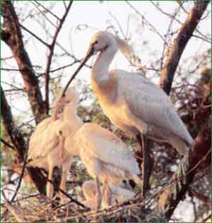 Keoladeo Ghana Bird Sanctuary in Bharatpur
