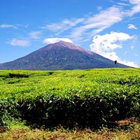 Kerinci Seblat National Park