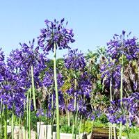Kirstenbosch Botanical Gardens in Cape Town