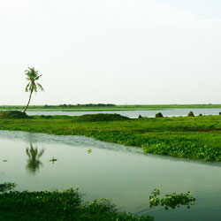 Kolleru Lake in Eluru