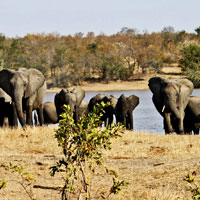 Kruger National Park in Limpopo
