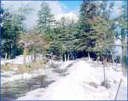 Kufri Hills in Kufri