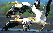 Kumarakom Bird Sanctuary in Kumarakom