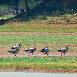 Kunthakulam Bird Sanctuary in Tirunelveli