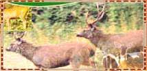 Madhav National Park