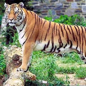 Mahananda Wildlife Sanctuary
