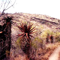Makapansgat Valley in Limpopo