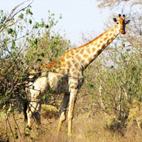 Maun Game Reserve in