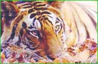 Melghat Tiger Reserve in Amarvati