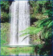 Millaa Millaa Falls in Cairns