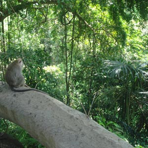 Monkey Forest Sanctuary in Bali