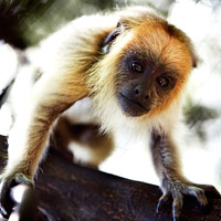 Monkeyland Primate Sanctuary in Garden Route