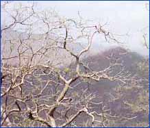 Mount Abu Hills