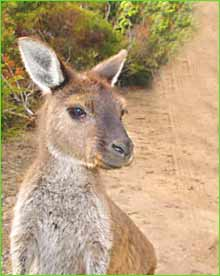 Mount Remarkable National Park in Adelaide