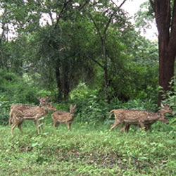 Nagarhole National Park in Bangalore