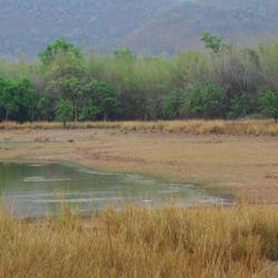Nagarjunasagar Wildlife Sanctuary in Nagarjunakonda