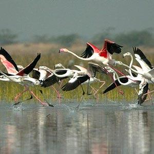 Nal Sarovar Bird Sanctuary