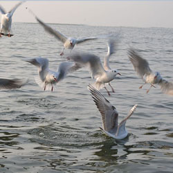 Nal Sarovar Bird Sanctuary in Ahmedabad
