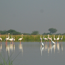 Nalsarovar Bird Sanctuary in Ahmedabad