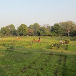 National Rose Garden in New Delhi