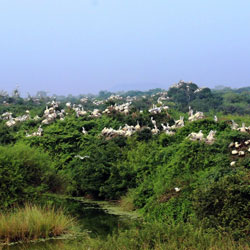Nelapattu Bird Sanctuary in Nellore