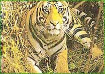 Pachmarhi National Park