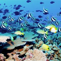 Palolo Deep Marine Reserve