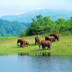 Periyar Wildlife Sanctuary in Idukki
