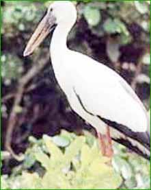 Peshwa Udyan Zoo in Pune
